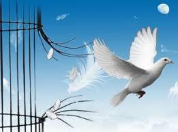 Détachement de Traumatismes® Hypnose PNL Coaching colombe s'échappant de sa cage